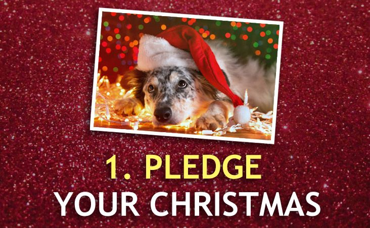 Pledge your Christmas